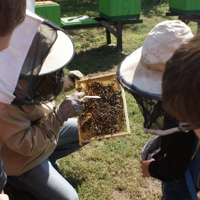 Smolna – wioska przyjazna pszczołom